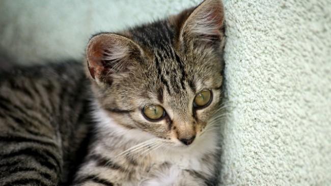 Котка изпадна в немилост! Мъж я обвини за бременността на жена си