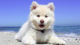 Внимание! Ето как да спасите кучето от жегите