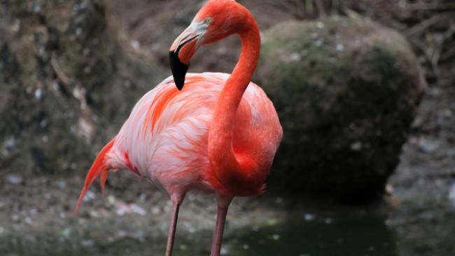 Нов старт за планетата: Розови Фламинги се завърнаха в езерото Накуру в Кения