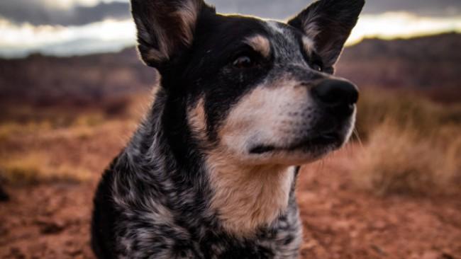 Куче разплака света - изгуби бебетата си, но осинови котенца