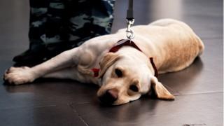 Кучета надушват заразени с коронавирус на летище в Хелзинки