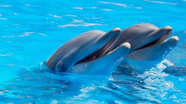 Делфини-роботи сменят истинските в делфинариумите