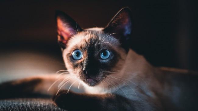 5 от най-опасните и проклети породи котки