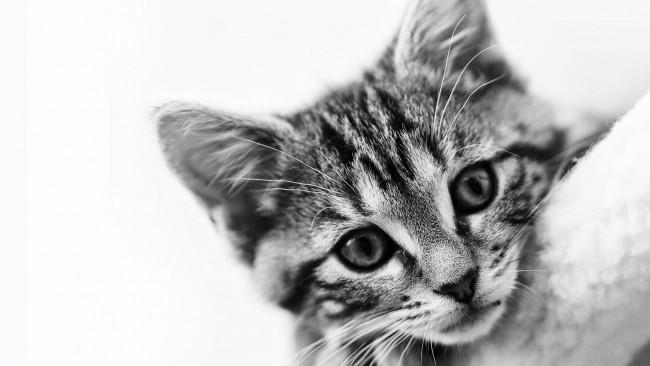 Как котките усещат болестта на стопанина си