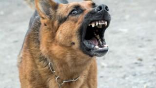 Кучето или децата ни? Не, не става въпрос за избор, а за спазване на закона