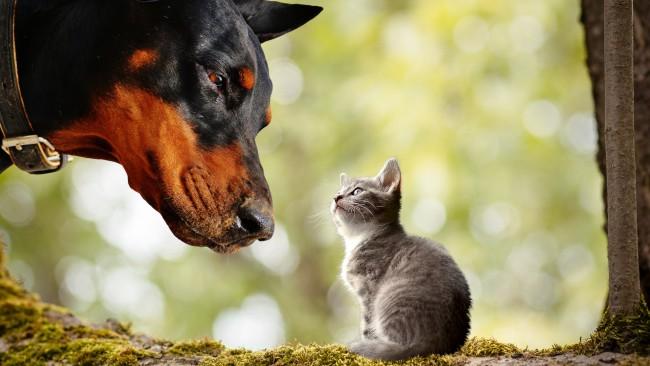 Ако искате да сте щастливи, вземете си кучe или котка