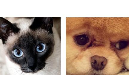 Котка или куче?