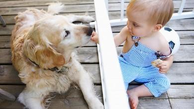 Домашните любимци са полезни за здравето на децата