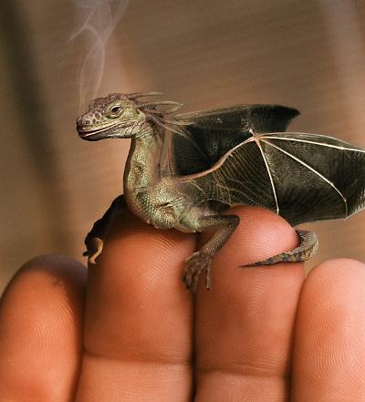 2011: година на Заека и време за късмет Baby-dragon(1)